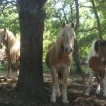 Le centre equestre, Tous en selle, à Rians dans le Var, Les chevaux
